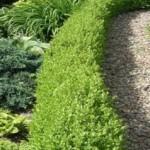 Какие выбрать растения для бордюров?