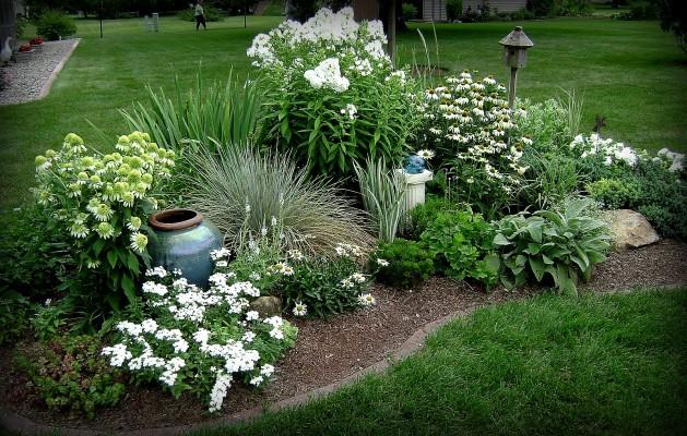 белые цветы в саду фото и названия 1