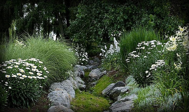 белые цветы в саду фото и названия