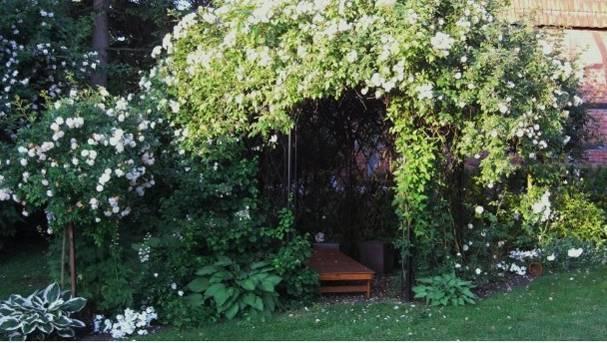 белые цветы в саду летом