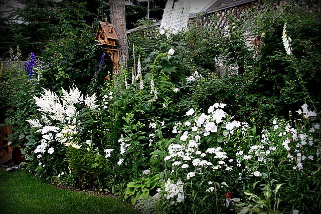 белые цветы в саду весной