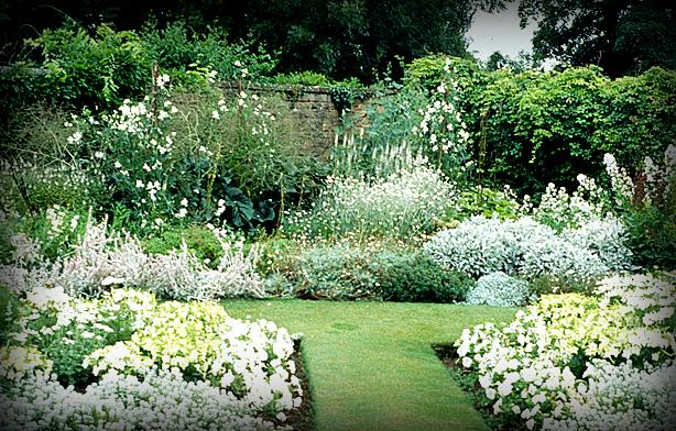белые цветы в саду