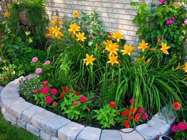растения для бардюров