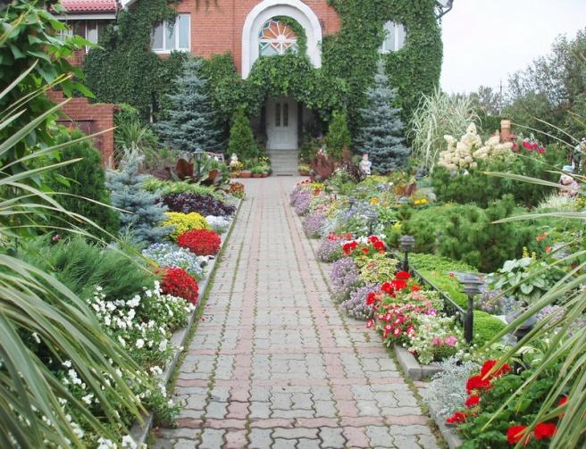 растения для живого бардюра